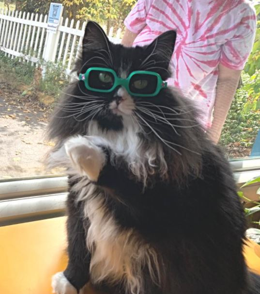 Rescue Cat Hired By Opticians To Help Children Feel Comfortable Getting Glasses