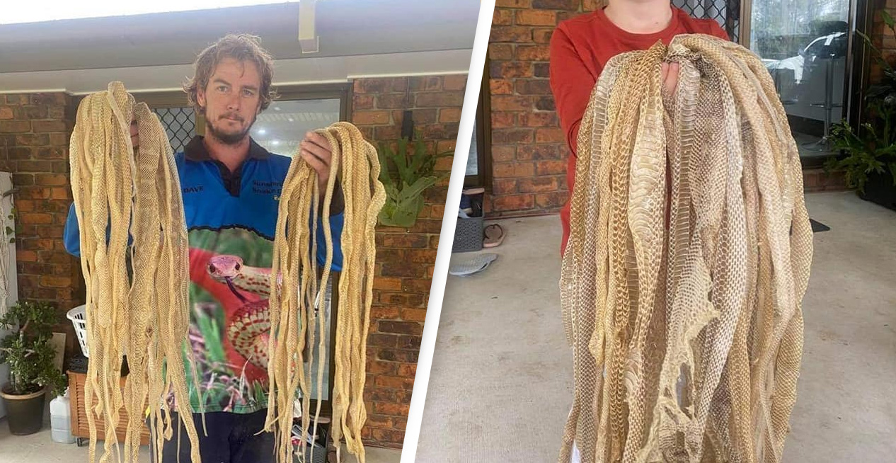Family Stunned After More Than 50 Snake Skins Found In Their Home