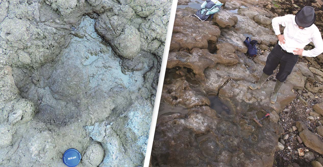 Footprints Of Last Dinosaurs To Walk In Britain Have Been Found In 'Extraordinary Discovery'